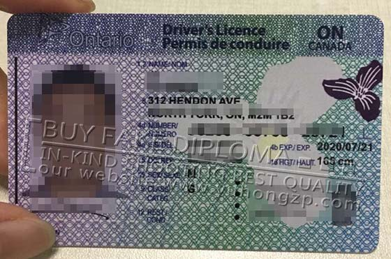 Ontario Driving License replica